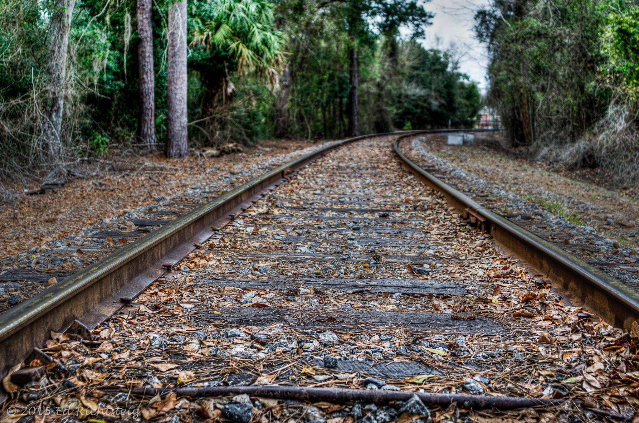 Railroad tracks on the Georgia Florida Line.  Image by Ed Richtsteig Photography